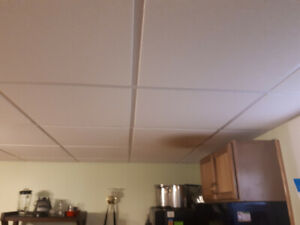 Ceiling Tiles and mouldings - Mint Condition
