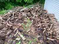 FREE willow firewood