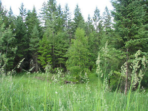 Build your dream home in one of Williams Lakes finest locations Williams Lake Cariboo Area image 7