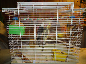 Down-sizing - Cockatiel Pair with Cage