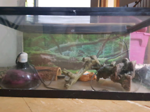40 gallon breeder terrarium