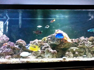 125 gallon saltwater aquarium with 30 gallon sump