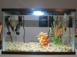 Fancy Beta with 5.5 gallon tank Cambridge Kitchener Area image 2