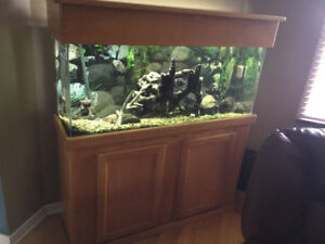 90 gallon aquarium fish tank with canopy & stand HAM
