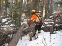 Hiring Certified Chainsaw Operators and Labourers