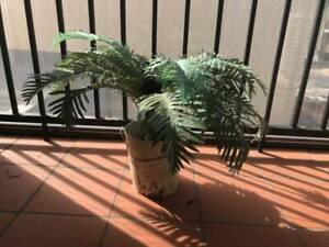 Faux Fern Plant and Pot 50cm height