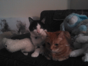 2 Cats need loving home.