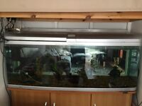 400 litre fish tank full set up including fish