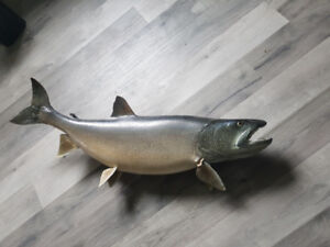 Trophy Fish ( 6 )   great for restaurant or bar $200 each