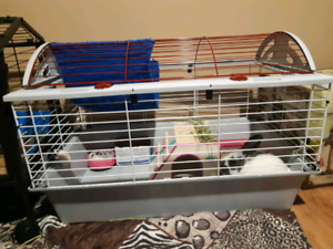 Baby Bunny and Cage