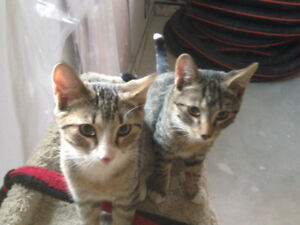 4 month old kitten brothers to be Re-homed for FREE