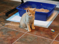 QUACKIE WAS RESCUED from being left on a door step. Amazing male