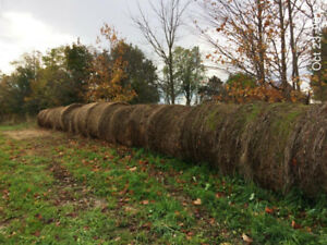 Hay for sale large round bales 4X4