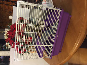 Hamster cage (pine bedding included)