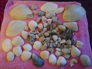 lot de coquillages de mer et roches