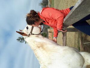 Cours d'équitation western à Sainte-Anne-des-Plaine
