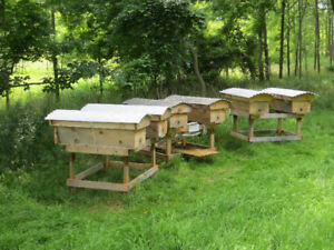 Top bar bee hive bodies built to order