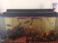 Aquarium 35g