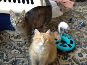 Bonded adorable cats for good home