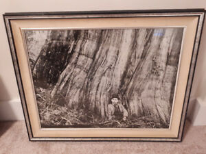 LOOK > 13 x Vintage Forestry Logging Matted Prints. Early 1900,s