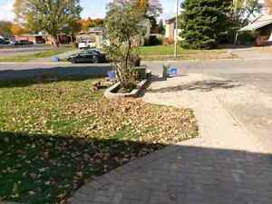 Last minute landscaping? We can help! Kingston Kingston Area image 4