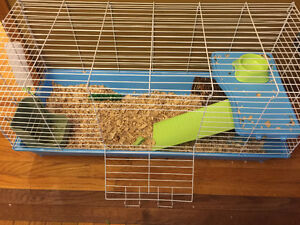 Holland Lop Bunny with Cage