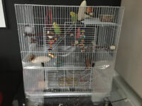 BUDGIES + BIG CAGE + TRAVEL CAGE