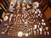 PRIVATE COLLECTION OF SEASHELLS