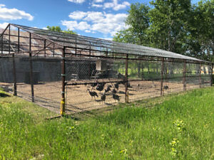 steel frames for farm use: poultry/bird or animal enclosure