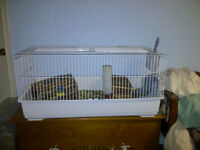 2 Guinea Pigs and Accessories