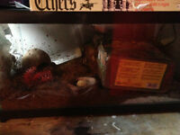 hermit crab tank and accessories