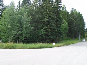 BY OWNER Walk-out Backing on to Wilderness in the Crowsnest Pass