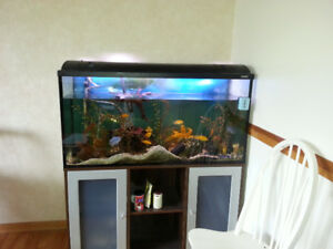 fish for sell