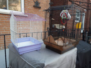 healthy zebra finch with 2 cages and toys