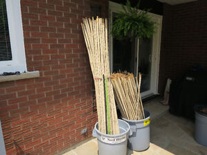 Bamboo for your yard decor
