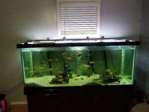 220 gallon fish tank package deal