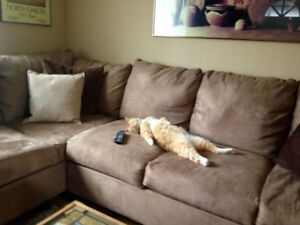 ☻☺☼ Got Pets ? Got Furniture? - I Can Help - Sofa/Chr $49 ☼☺☻