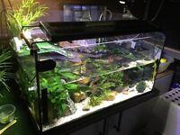 Fish/Turtle Tank Aquarium Set Up