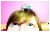 Gardiennage de petits animaux :)