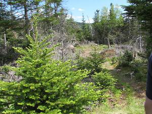 12 ACRE RIVERFRONT ESTATE…181 SALMONIER LINE, HOLYROOD. St. John's Newfoundland image 14