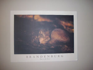 Brandenburg -Peace in the Forest