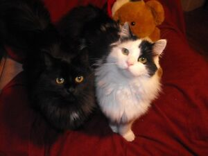 2 mature cats to rehome
