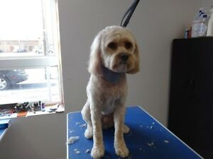 DOGGY STYLE GROOMING Cornwall Ontario image 5