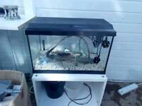 Fish Tank with Lid. Less then 2 foot Exeter