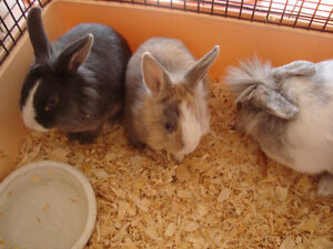 Mobile Petting Zoo for Birthdays/Seniors homes/Special events Peterborough Peterborough Area image 4