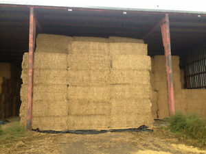 Green Hay Stored in Shed for Sale