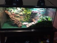 Water dragon with complete setup