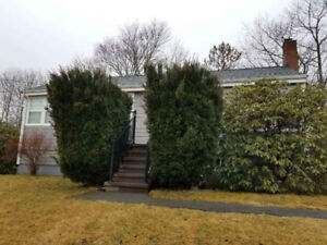 2 Huge Evergreen Shrubs For Sale - Great for Privacy!
