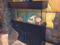 55g aquarium with stand and canopy