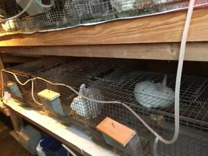 RABBITRY, CAGES, FEED, NEST BOXES